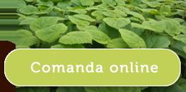 Comanda online Paulownia Tomentosa