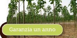 Garanzia Paulownia Development