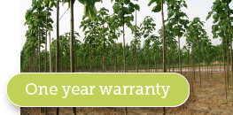 Paulownia Development Warranty